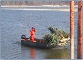trees in boat